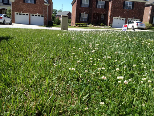 Lawn Weed Control Killer Yadkinville NC Kill Weeds and Crabgrass